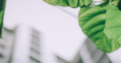 Green Building Labels im Aufwind. Foto: Pexels, Foto Arun Thomas